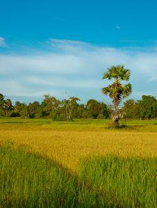 Free Rice Field, Laos Stock Photos - 21554753