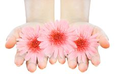 Free Two Women Hands Holding Gerberas Stock Images - 21554844