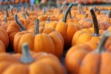 Free Small Little Pumpkins Stock Image - 21557631