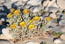 Small Yellow Daisy Bush Stock Photos