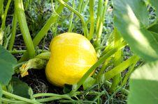 Free Gourd Royalty Free Stock Image - 21557736