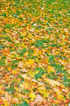 Free Beautiful Autumn Background Stock Photos - 21564973