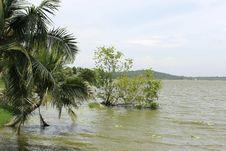 Free Vellayani Lakes Royalty Free Stock Photo - 21567025