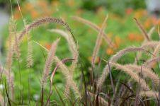 Free Grass Stock Photo - 21568130