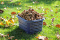 Free Full Basket Of Walnuts Stock Images - 21577784
