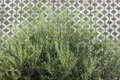 Free Olive Tree Royalty Free Stock Photos - 21578268
