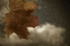 Free Maple Leaf On Window Stock Images - 21570724