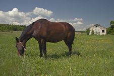 Free Horse On A Meadow Stock Photography - 21571862