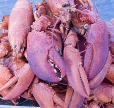 Free Cooked Lobsters Stock Photography - 21574022
