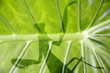 Free Mantis Behind A Large Leaf Stock Photo - 21575810