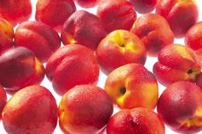 Free Family Of Plums Stock Photography - 21576662