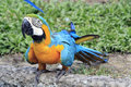 Free Colorful Blue Parrot Macaw Stock Photography - 21589482
