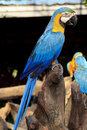 Free Colorful Blue Parrot Macaw Stock Image - 21589491