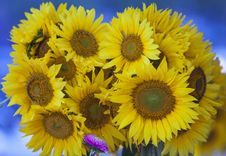 Free Sunflower Bouquet Royalty Free Stock Photo - 21580585