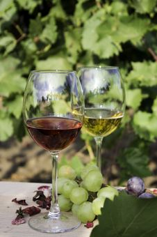 Free Red And White Wines Stock Images - 21583284