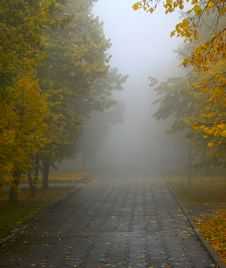 Free Fog In Autumn Park Stock Photos - 21584033