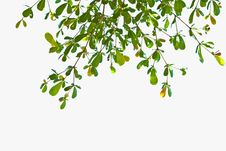 Free Green Leave Stock Images - 21589674
