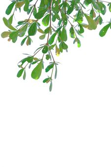 Free Green Leave Royalty Free Stock Photos - 21589688