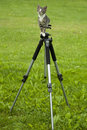 Free Cat On Tripod Royalty Free Stock Photo - 21597675