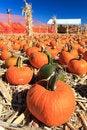 Free Pumpkin Sale Royalty Free Stock Photography - 21598097
