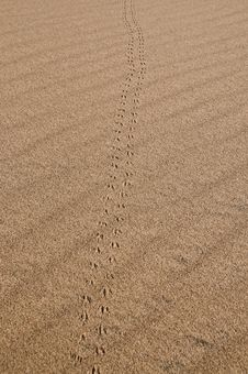 Free Animal Tracks In Sand Pattern Stock Images - 21590074