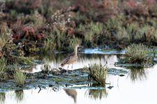 Free Water Bird Stock Photo - 21591050