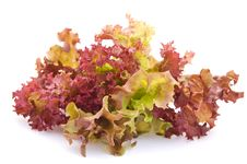 Free Lettuce On A White Background Royalty Free Stock Photography - 21591997