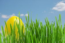 Free Yellow Easter Eggs In Green Grass  Under Blue Sky Stock Photo - 21593030