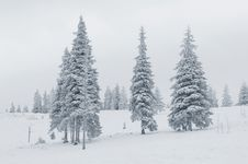 Free Winter Scene Royalty Free Stock Photography - 21593707