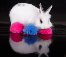 Free Rabbit Stock Photography - 21593912