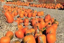 Pumpkin Royalty Free Stock Photography