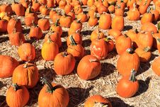 Free Pumpkin Royalty Free Stock Photography - 21598667