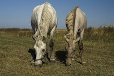 Free Horse And Foal Grazing (parallel) Stock Image - 21599011