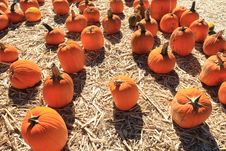 Free Pumpkin Sale Royalty Free Stock Photography - 21599337