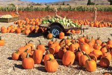 Free Pumpkin Sale Royalty Free Stock Image - 21599376