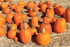 Free Pumpkin Sale Royalty Free Stock Photography - 21599387