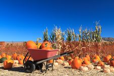Free Pumpkin Sale Royalty Free Stock Photography - 21599407