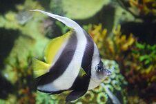 The Moorish Fish Stock Photos