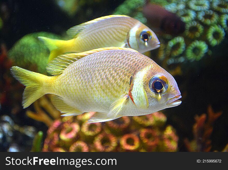 The squirrel fish