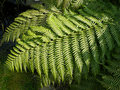 Free Fern Leaves Stock Photography - 2162432