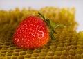 Free Honey Comb Stock Image - 2168861