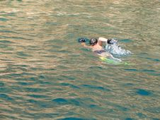 Free Boy Swimming In The Sea Stock Photography - 2161822
