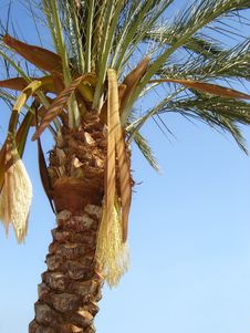Free Nature-scenery With Palmtrees Stock Photo - 2162010