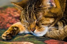Close Up Of Sleeping Cat Stock Photos