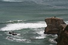 Free Maori Bay Gannet Colony 2 Stock Photography - 2165242