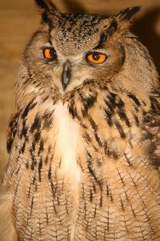 Free Eagle Owl Stock Photos - 2165483