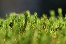 Free Green Moss Stock Photography - 2165872