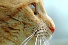 Free Pretty Yellow Cat Face Stock Photography - 2167512