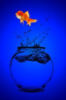 Free Goldfish Looking Stock Photos - 2167623