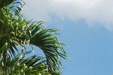 Free Palm Tree Stock Photography - 2167732